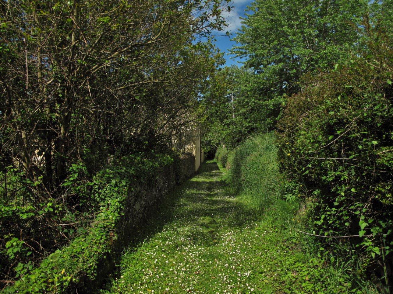 Calci - sentiero tra vigne e ulivi