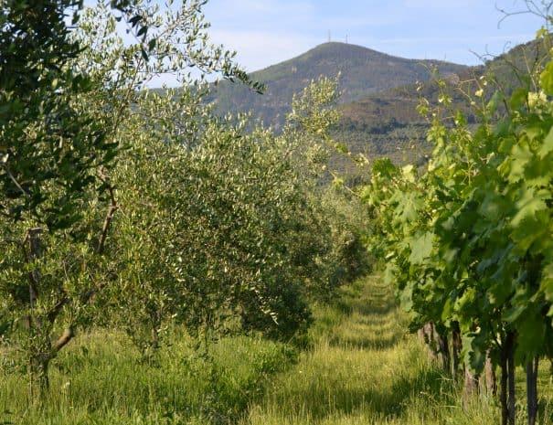 ekiros-calci-fattoria-san-vito